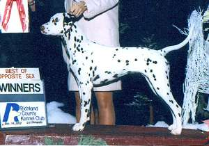 Margie winning her first major as a puppy